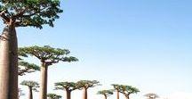 Voyage Madagascar en famille / Toutes mes inspirations pour votre prochain voyage et séjour à Magagascar en famille avec les enfants : circuit, que faire et que voir, hôtels de charme... Pour en savoir plus, visiter www.voyagefamily.com !