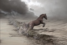 Horse Thoroughbred / Campolina, Mangalarga Marchador, Quarter Horse, Arabian Horse, Thoroughbred, and Haras Creators, Saddlery, Equestrian.