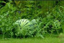 garden(bahçe)