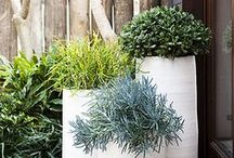 X Vasos - Cachepots - Pots / Arquitetura Paisagismo Garden Design Landscape Architecture