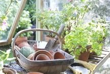 INTERIOR - SERRE / Trees, plants, flowers, pots and everything