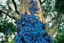 nature / all things nature + natural...