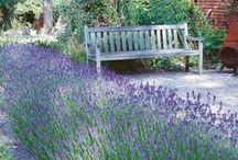 in the garden / gardening, horticulture, botany...