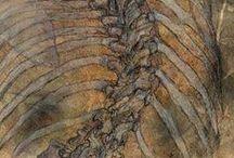 ART-and anatomy