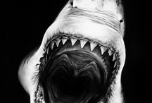 I'm obsessed with sharks, but they scare the hell outta me / by Matt Wall