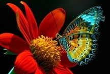 Butterflies / by Guadalupe Cano Daley