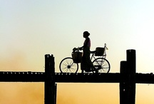 Bicycles / by Guadalupe Cano Daley