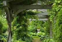 Wish I had a green thumb... / by Caryn Grow