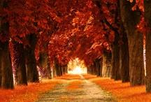 rustic autumn  / by Shannan