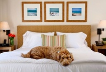 Pet Friendly / Does Fido love the beach as much as you do? Well bring him along! Inn at Laguna Beach is the only hotel in town to offer your pooch room and board and dog walking packages.  / by Inn at Laguna Beach