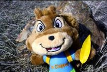 Chipper Photo Bombs / Join Chipper in exploring the great outdoors! Get your small or large plush today: http://bit.ly/17pdXgC
