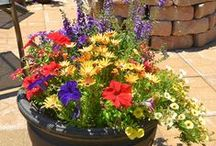 Container Gardening / by Elayne Forgie