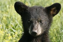 Bears / Adorable / by Guadalupe Cano Daley