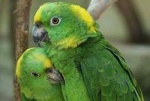Baby Bella Fiorella - Quaker Parrot / by Elayne Forgie
