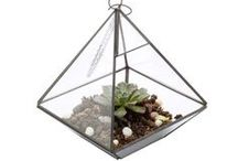 Terrariums / Glass terrarium ideas & products / by Contents: Party, Christmas & Home
