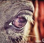 Pferde Artikel - Pferdeblogs / Hier findest du viele Blog-Artikel zum Thema Pferd. Ein eigenes Board von Pferdebloggern für Pferdemenschen. Infos, Ratschläge und nützliche Tipps für dich und dein Pferd.