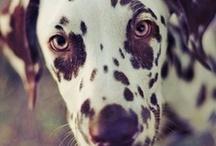 Animals :) / by Gabrielle K.H