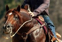 Wyoming Mustangs / Pictures, Facts, & Fun things to do in Wyoming. / by Penny N. Bassett