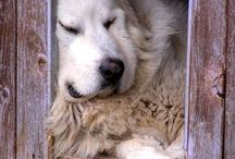 Cutesy pets ♥ the sunshine in our lives / abundant blessing upon blessing  / by Marlene