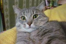 Маркиз  / это мой кот)))