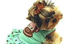 ~ Pets Duded Up ~ / ....................... Dogs, Cats and other pets in clothing.Dogs, Cats and other pets in clothing............................      ★★★★★★★★★ NO SPAMMING - NO ADVERTISING ★★★★★★★★★