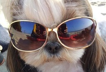 Dog Beauty / pictures of all cute, beauty and funny  doggies :)