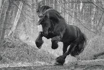 ❤️Friesian horse ❤️ / by Karin