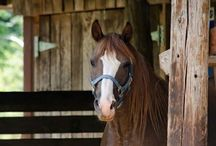 Sirocco / All things equine