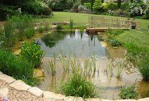 Dam / Natural swimming hole