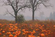 Pumpkin / Pumpkins and gourds
