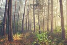 Inspiration: Woodlands