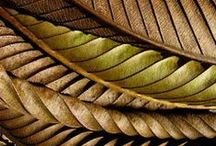 Inspiration: Leaves