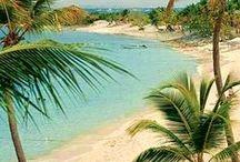 Inspiration: Tropical
