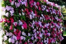 Gorgeous Gardens / by Deborah Parry