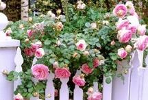 Recipe for a beautiful Garden