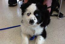 Value Pet Clinic: Kent / Photos taken at our Kent clinic. Located at: 12925 SE Kent-Kangley Road Kent Wa 98030