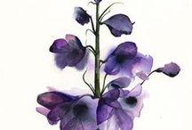 Illustr. & Paintings |  Flowers & Cia.