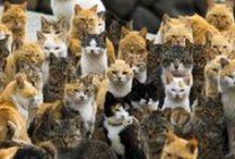 """Isla Aoshima, conocida como """"Isla de los Gatos / En Japón existe una pequeña isla donde la población felina supera 6 veces a la humana. Te invitamos a conocer la Isla Aoshima"""