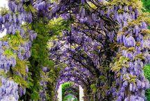 Beautiful  / Nature, style, art