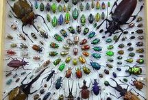 Insecta / Beetles, wasps, moths, flies and other insects