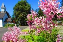 Parksville Museum's Landscape / The presence of the picturesque flora is one of the reasons why the Parksville Museum & Archives constantly attracts painters, drawers and photographers who want to capture its beauty.