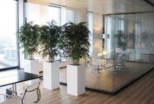 Artificial Plants in Offices / Want to give your Office Space a green touch but don't want to waste time and money on watering your plants? These high quality Artificial Plants will bring your Office some green inspiration!