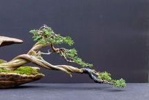 bonsai art 盆栽 / i love bonsais