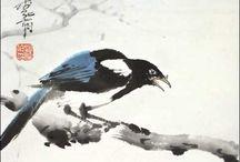 magpie 喜鹊 / bird