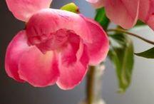 Blumen (Flower Friday) / Blumen - drinnen und draußen