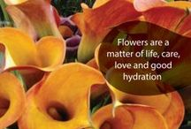 Florverde®  Sustainable Flowers / The difference is...