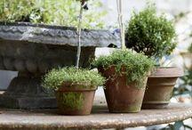 Inspirations: Garden / About great ideas in designig garden.