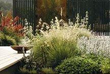 Landscaping , Plants & Cachepots