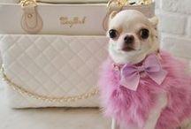 Furry Fashionistas