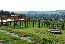 Pince a Szőlőhegyen / Cellar in the vineyard